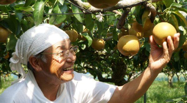 食べるー白鳳梨