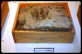 ワニ足跡化石