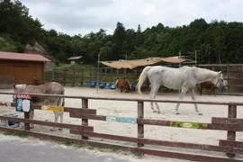 小さなのんびり学習牧場