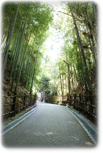 竹の道 小六坂