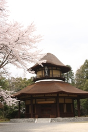 俳聖殿-桜