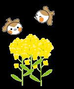 菜の花と雀